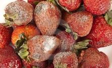 Fruit A