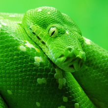 fear-of-snakes-phobia-ophidiophobia